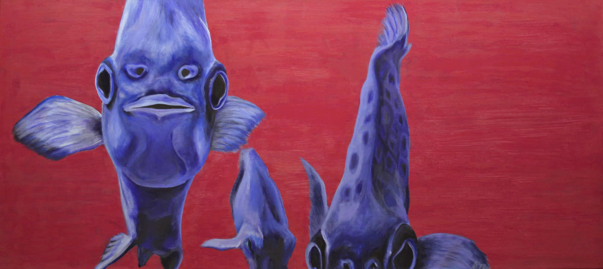 Argusfische