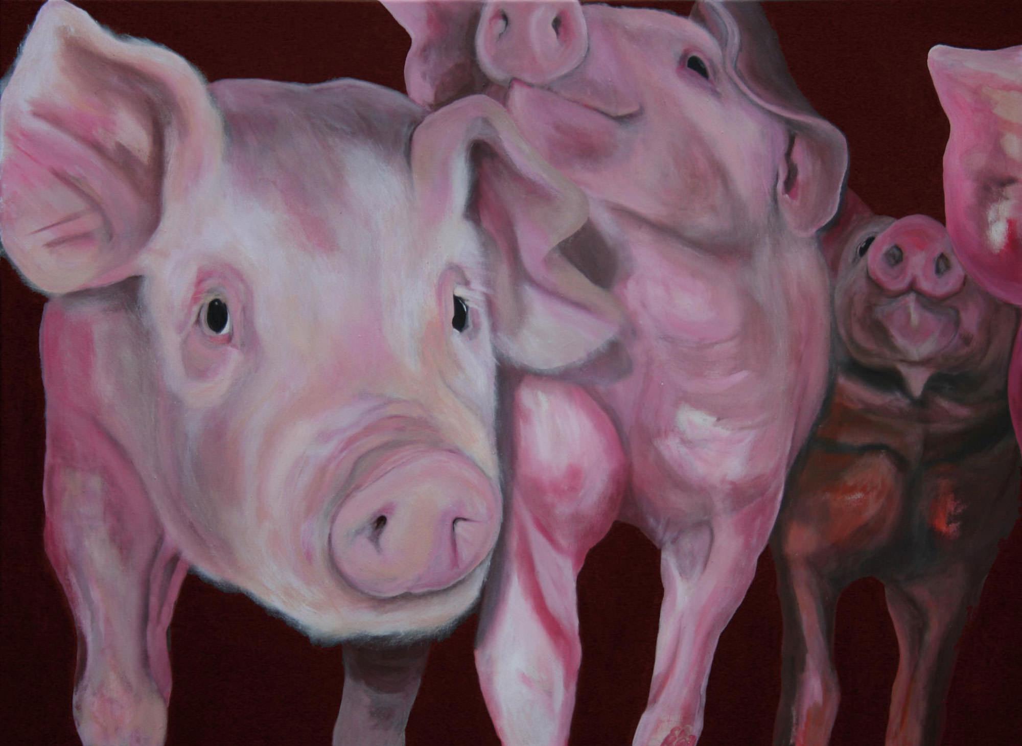 Schweinegruppe