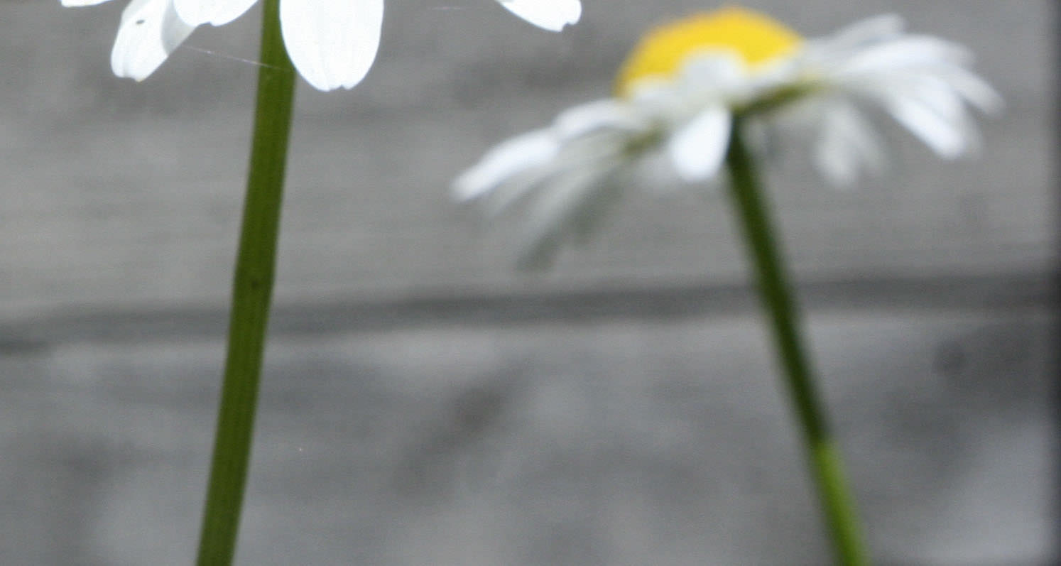 Treue im Garten