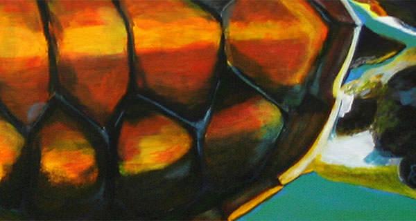 Junge Meeresschildkröte